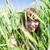 девушки · пшеницы · красивая · девушка · женщину · небе · солнце - Сток-фото © FotoVika