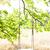 üres · hinta · fából · készült · zöld · park · távoli - stock fotó © fotovika