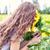 the girl smells sunflowers stock photo © fotovika