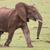 elefante · africano · grande · aire · parque · elefante · blanco - foto stock © fouroaks