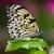 紙 · カイト · 蝶 · マクロ · ショット · アイデア - ストックフォト © fouroaks