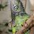 groene · leguaan · draak · schaal · helm · hagedis - stockfoto © fouroaks