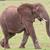 Африканский · слон · мужчины · большой · трава · ходьбе · кожи - Сток-фото © fouroaks