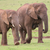african elephant herd stock photo © fouroaks
