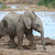 baby african elephant at water hole stock photo © fouroaks