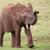 アフリカゾウ · 男性 · 草 · 徒歩 · 皮膚 - ストックフォト © fouroaks