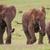 elefante · africano · rebanho · africano · elefantes · naturalismo · habitat - foto stock © fouroaks