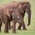 african elephant herd stock photo © fouroaks