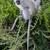 majmok · zöld · baba - stock fotó © fouroaks