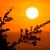 nagy · afrikai · fa · sziluett · naplemente · mező - stock fotó © fouroaks