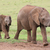 young african elephant friends stock photo © fouroaks