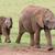 büyük · Afrika · filler · nehir · Botsvana - stok fotoğraf © fouroaks