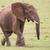Африканский · слон · мужчины · большой · африканских · воды · Африка - Сток-фото © fouroaks