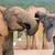 elefántok · megérint · egyéb · üdvözlet · elefánt · Afrika - stock fotó © fouroaks