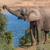 elefante · africano · femenino · grande · viaje · parque · elefante - foto stock © fouroaks