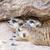 ガード · かわいい · 石 · ブラウン · 砂の - ストックフォト © frameangel
