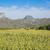 campo · girassóis · brilhante · verão · dia · flor - foto stock © frameangel
