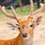 szarvas · fej · közelkép · állatkert · fű · háttér - stock fotó © frameangel