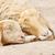 pequeno · cordeiro · bebê · cara · natureza - foto stock © frameangel