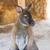 agile · femminile · parco · settentrionale · territorio · Australia - foto d'archivio © frameangel