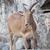 birka · kő · Afrika · park · állat · környezet - stock fotó © frameangel