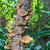 cogumelo · branco · comida · fundo · medicina · vermelho - foto stock © frameangel