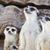 座って · 地上 · 南アフリカ · 草 · 自然 · アフリカ - ストックフォト © frameangel