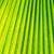 yeşil · kabarcıklı · detay · tam · kare · soyut - stok fotoğraf © frameangel