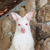 bebek · kanguru · çim · saç · arka · plan - stok fotoğraf © frameangel