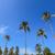 boom · hemel · groene · bladeren · strand - stockfoto © frameangel