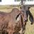caw in field stock photo © frameangel