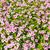grama · fresco · metálico · primavera · metal - foto stock © frameangel