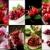 rojo · frutas · collage · frutas · hortalizas · alimentos · saludables - foto stock © francesco83