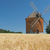 Brick windmill in a field of corn.  stock photo © frank11