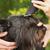 черный · шнауцер · собака · белый · фон · лице - Сток-фото © frank11