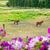 ポニー · 馬 · ファーム · 表示 · 馬 · 国 - ストックフォト © frankljr