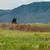 büyük · boğa · batı · hayvan · yaban · hayatı · park - stok fotoğraf © frankljr