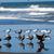 variedade · céu · natureza · azul · areia · vida - foto stock © Frankljr