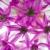 virág · virágzik · makró · tavasz · háttér · nyár - stock fotó © frankljr