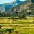 ló · nyár · testtartás · hegyek · gyönyörű · kilátás - stock fotó © frankljr