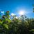 girassol · campo · blue · sky · céu · primavera · fundo - foto stock © franky242