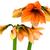 çiçek · aile · odak · doğa · arka · plan · kırmızı - stok fotoğraf © franky242
