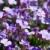 engem · nem · virág · makró · közelkép · kék - stock fotó © franky242
