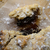 overhead close up of mince pie broken open stock photo © frannyanne