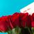 anyák · nap · üzenet · vörös · rózsák · kártya · gyönyörű - stock fotó © frannyanne