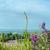 roxo · flores · silvestres · praia · flor · árvore · nuvens - foto stock © frannyanne