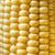 sweetcorn cob close up stock photo © frannyanne