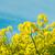 arany · mező · kék · ég · kilátás · virág · fa - stock fotó © frannyanne