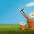 трава · цветочный · горшок · свежие · ботаника · Ромашки · растущий - Сток-фото © frannyanne