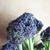 fresco · brócolis · preparação · de · alimentos · alimentação · saudável - foto stock © frannyanne